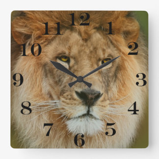 South Africa Majestic Lion Close up Square Wall Clock