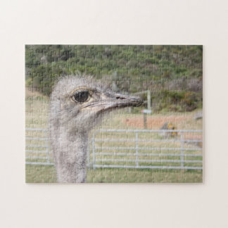 south Africa Ostrich Farm. Puzzle