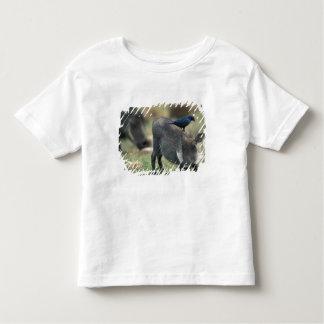 South Africa, Pilanesburg GR, Warthog Toddler T-shirt