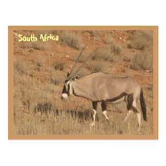 South Africa Postcard