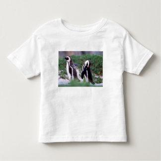 South Africa, Simons Town. Grooming Jackass T Shirt