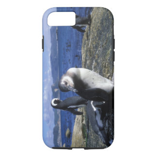South Africa, Simon's Town, Jackass Penguin iPhone 7 Case