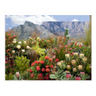 South African floral display of wildflowers Postcard