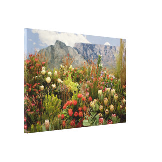 South African flower display in bloom Canvas Print
