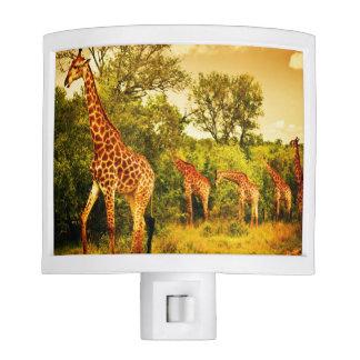 South African giraffes Nite Lites