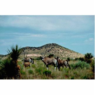 South African Oryx (Gemsbok) Standing Photo Sculpture