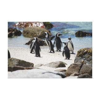 South African Penguins Gallery Wrapped Canvas