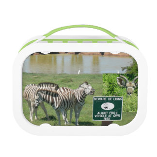 South African Zebras and Lions Lunchbox