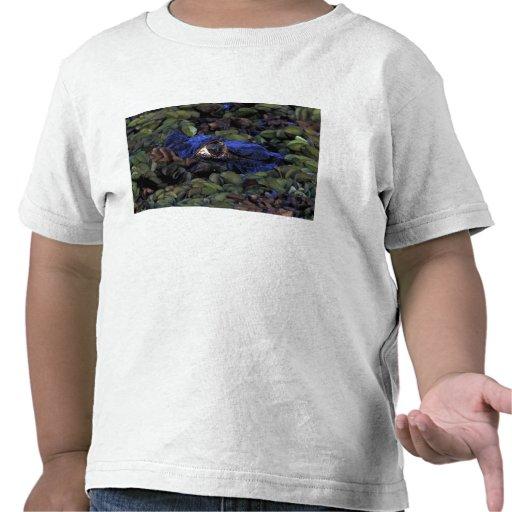 South America, Brazil, Amazon Rainforest, 2 Shirt