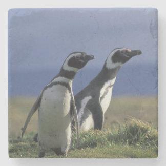 South America, Chile, Patagonia, Magellanes, 2 Stone Coaster