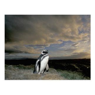 South America, Chile, Patagonia, Magellanes, Postcard