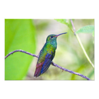 South America, Costa Rica, Sarapiqui, La Selva Photo Print