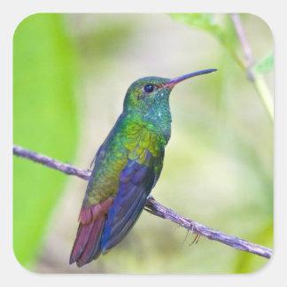 South America, Costa Rica, Sarapiqui, La Selva Square Sticker