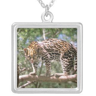 South America, Ecuador, Amazon. Ocelot Silver Plated Necklace