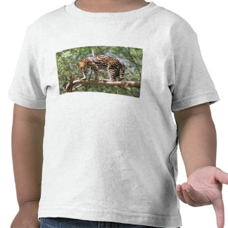 South America, Ecuador, Amazon. Ocelot T Shirts