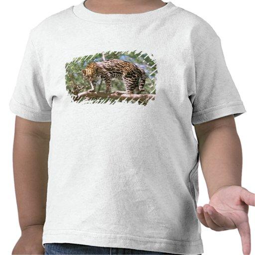 South America, Ecuador, Amazon. Ocelot T Shirts
