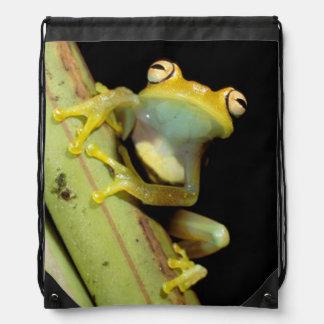 South America, Ecuador, Amazon. Tree frog (Hyla Cinch Bag