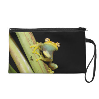 South America, Ecuador, Amazon. Tree frog (Hyla Wristlet Clutches