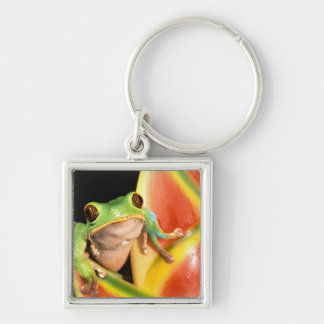 South America, Ecuador, Amazon. Tree frog Silver-Colored Square Keychain