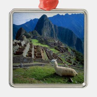 South America, Peru. A llama rests on a hill Metal Ornament