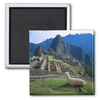 South America, Peru. A llama rests on a hill Square Magnet