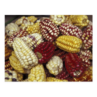 South America, Peru Corn, Maize Postcard