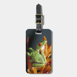 South America. Red-eyed tree frog Agalycmis Bag Tag