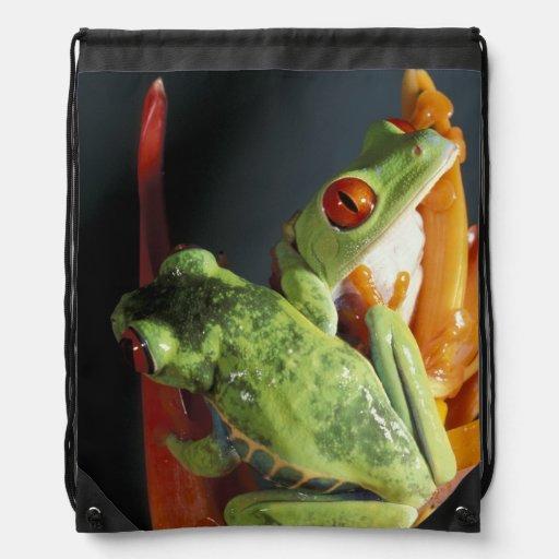 South America. Red-eyed tree frog Agalycmis Drawstring Bag