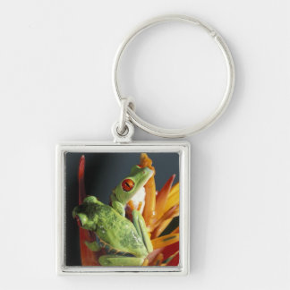 South America. Red-eyed tree frog Agalycmis Silver-Colored Square Keychain