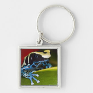 South America, Republic of Surinam. Close-up Keychain