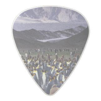 South America, South Georgia Island, King Acetal Guitar Pick