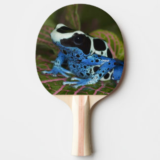 South America, Surinam. Close-up of Patricia Ping Pong Paddle