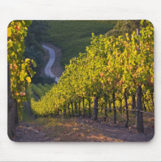 South Australia, Adelaide Hills, Summertown. 2 Mouse Pad