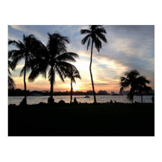 South Beach, Miami Palm Trees at Sunset Postcard