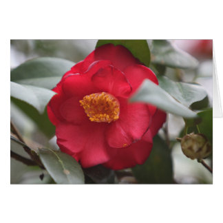 South Carolina Camellia Card