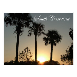 South Carolina Palmetto Sunrise Postcard