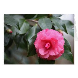 South Carolina Pink Camellia Card