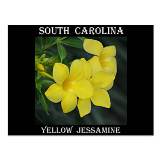 South Carolina Yellow Jessamine Postcard