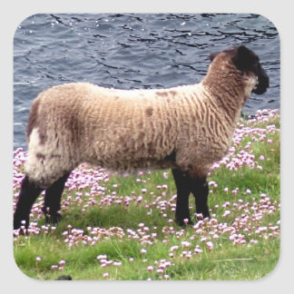 South Devon Coast Lamb Standing In Pinks Square Sticker