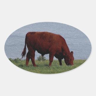 South Devon cow on remote coastline Oval Sticker