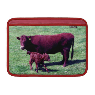 South Devon Ruby Red  Cow And Young Calf MacBook Air Sleeves