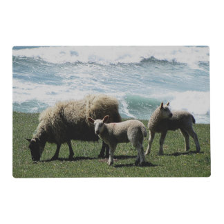 South Devon Sheep And Two Lambs On Wild Coastline Laminated Placemat