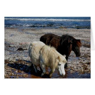 South Devon Two Shetland Ponies On Remote Beach Card