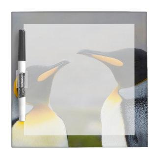 South Georgia. Saint Andrews. King penguin 3 Dry Erase Board
