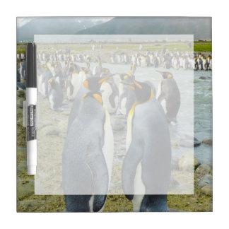 South Georgia. Saint Andrews. King penguin 6 Dry Erase Whiteboards