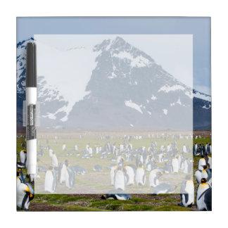 South Georgia. Salisbury Plain. King penguins 1 Dry-Erase Whiteboards