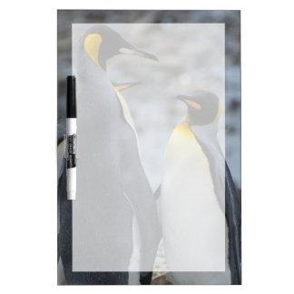South Georgia. Very tall King penguin Dry Erase Whiteboard