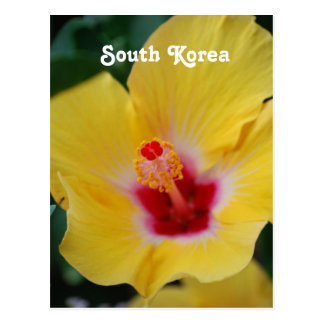 South Korean Hibiscus Postcard