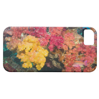 South Pacific, Fiji, Rainbow Reef in Taveuni Case For The iPhone 5