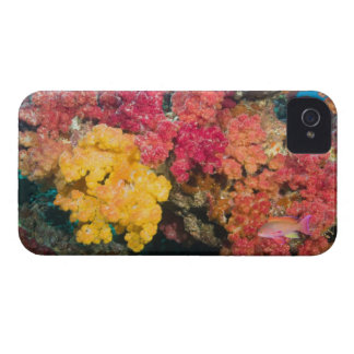 South Pacific, Fiji, Rainbow Reef in Taveuni iPhone 4 Covers